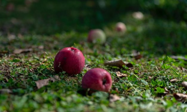 Things to do in the Garden in Autumn