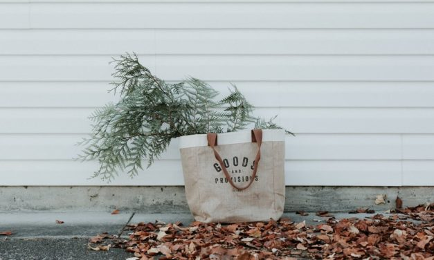 Three Fun Finds for Autumn