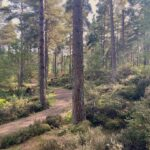 Devilla Forest, Fife
