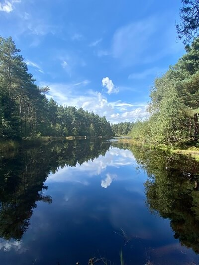 Woodland loch with blue sky reflection, at Devilla Forest, Fife