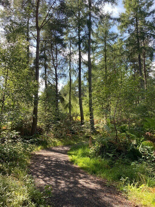 Path leading through trees in pine forest. Devilla, Fife.