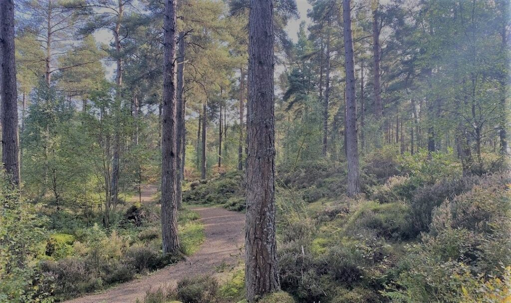 Devilla Forest, Fife