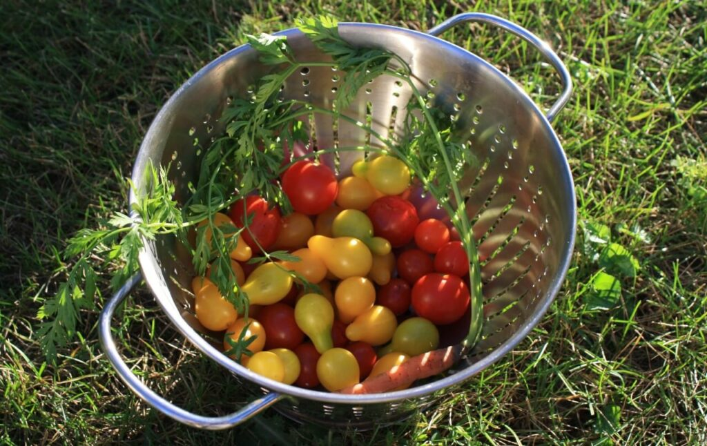 Eat seasonally with summer vegetables