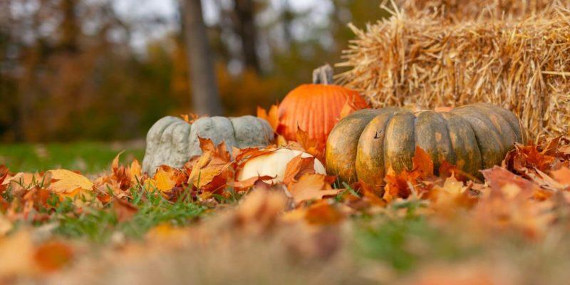 Pumpkins in a field beside a haybale in October